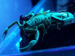 Scorpion19981000